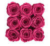 Emotional Roses Medium Vibrant Pink Square Black
