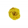 Emotional roses Mini Primrose Yellow Square Black
